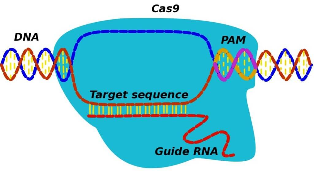 0821_CRISPR-2-WEB