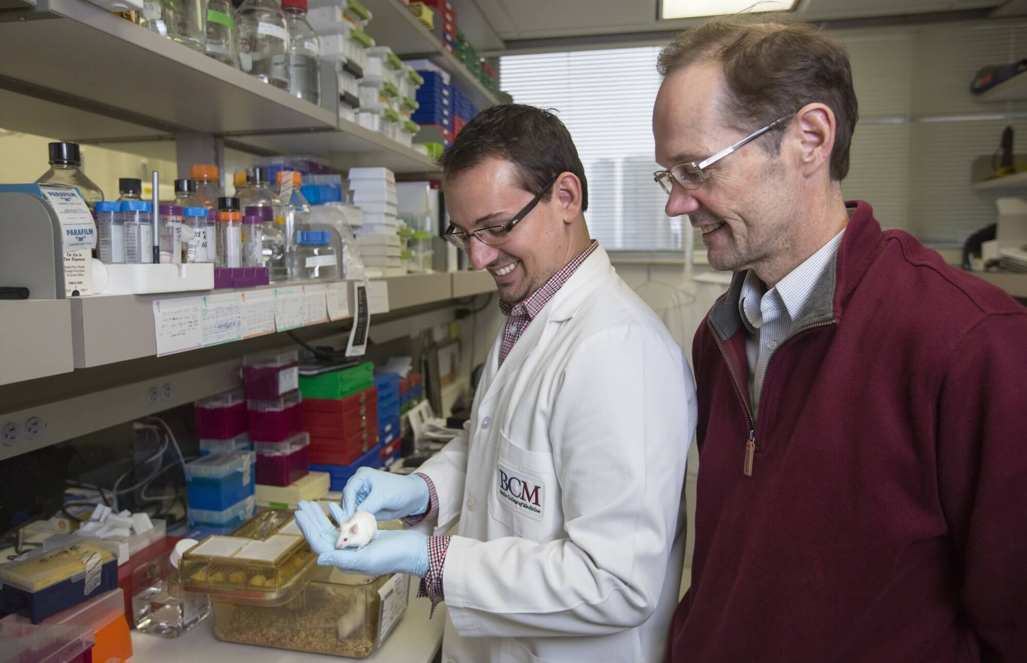 John Leach, a graduate student of molecular physiology and biophysics at Baylor College of Medicine, and James Martin, M.D., Ph.D., professor and Vivian L. Smith Chair in Regenerative Medicine at Baylor and director of the Cardiomyocyte Renewal Laboratory at Texas Heart Institute, in their lab.