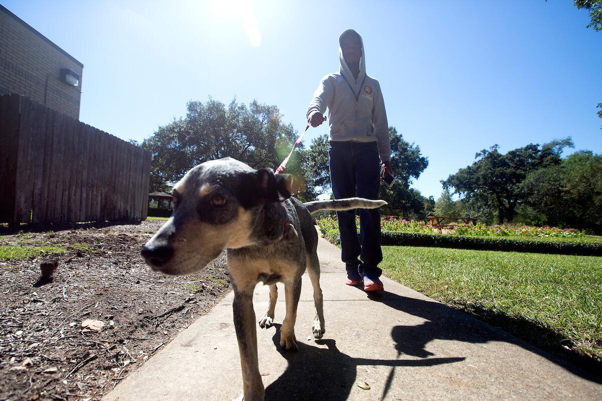 Samuel Joseph has helped train several foster dogs.