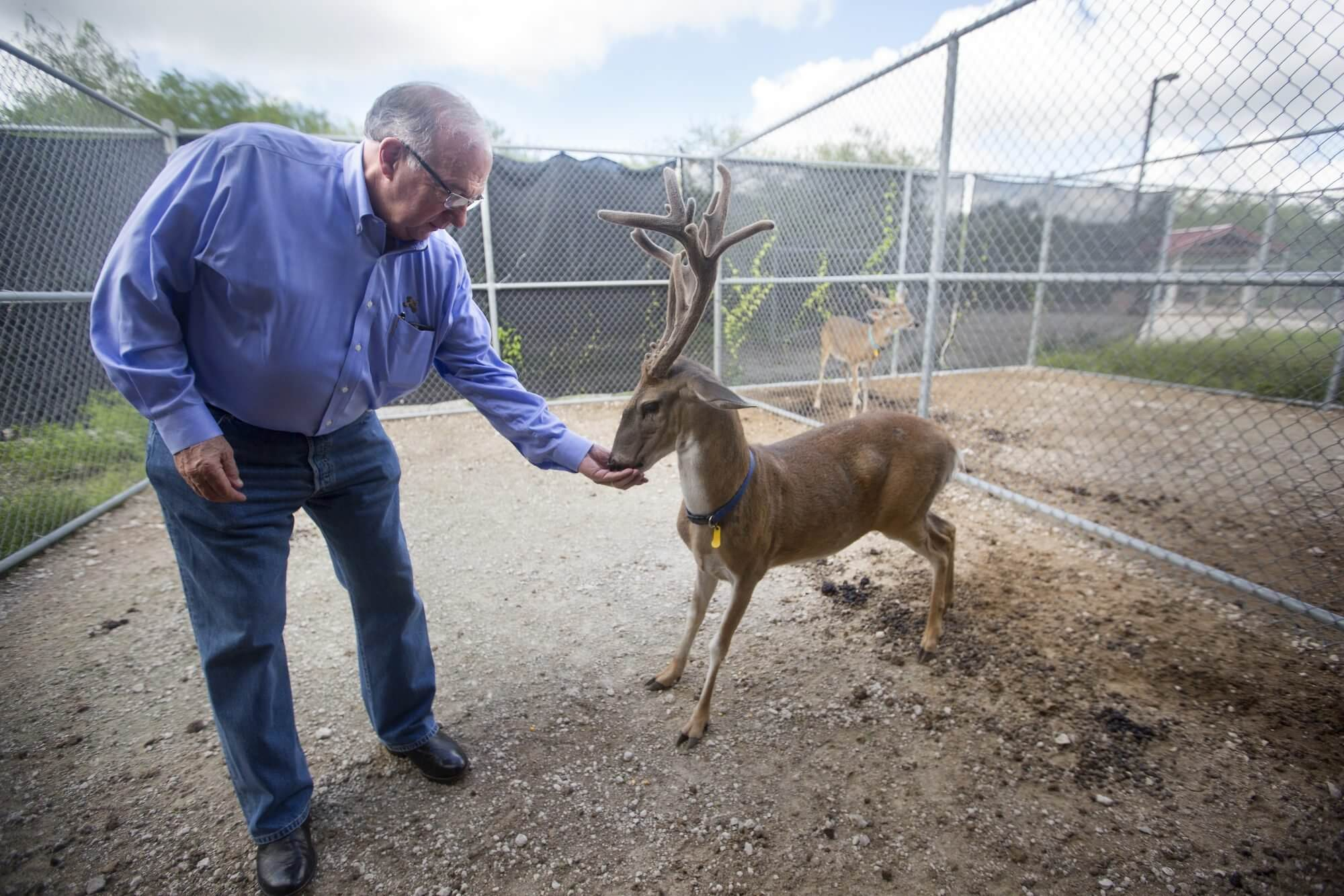 Berdon Lawrence with a white-tailed deer at Caesar Kleberg Wildlife Research Institute at Texas A&M University-Kingsville.