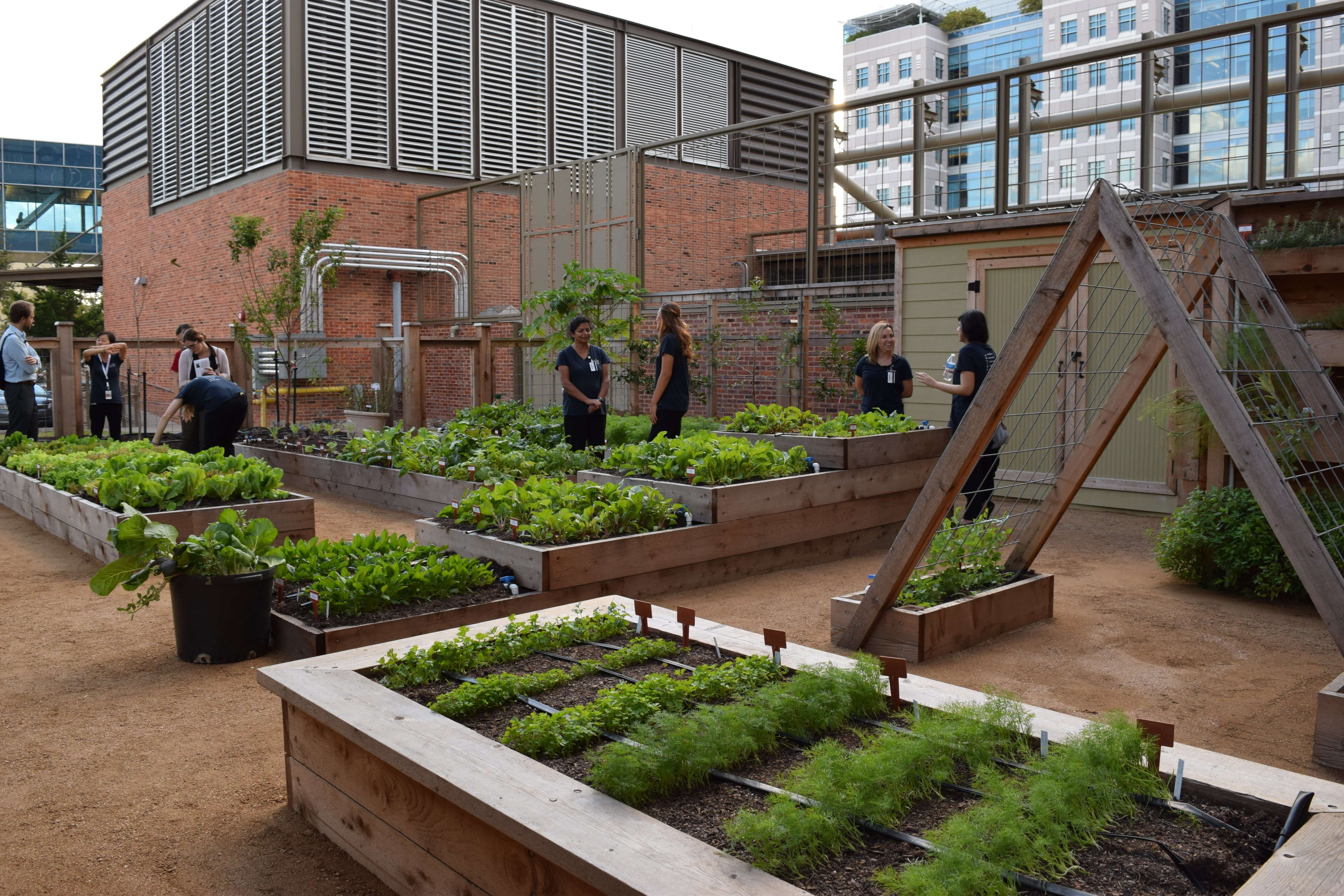 The holistic garden at the UTHealth School of Public Health