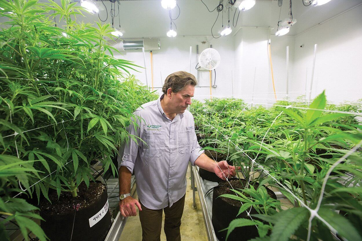 Morris Denton, CEO of Compassionate Cultivation in Manchaca, Texas, checks on cannabis plants.