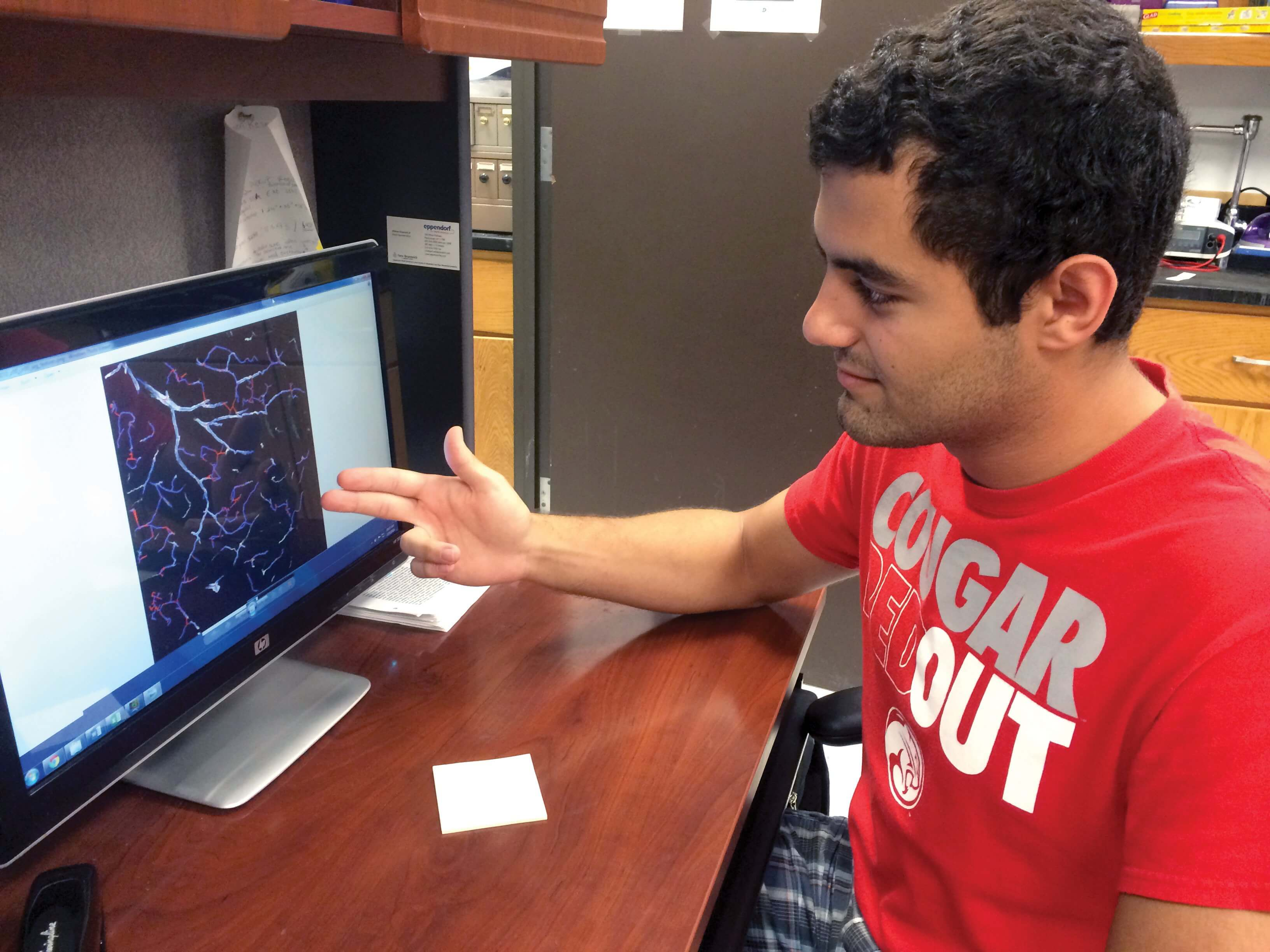 Sina Rezaei analyzes 3D images of brain tissue in an effort to paint a more complete picture of how the brain is affected by Alzheimer's disease. (Credit: Karen Weber/UH Honors College)