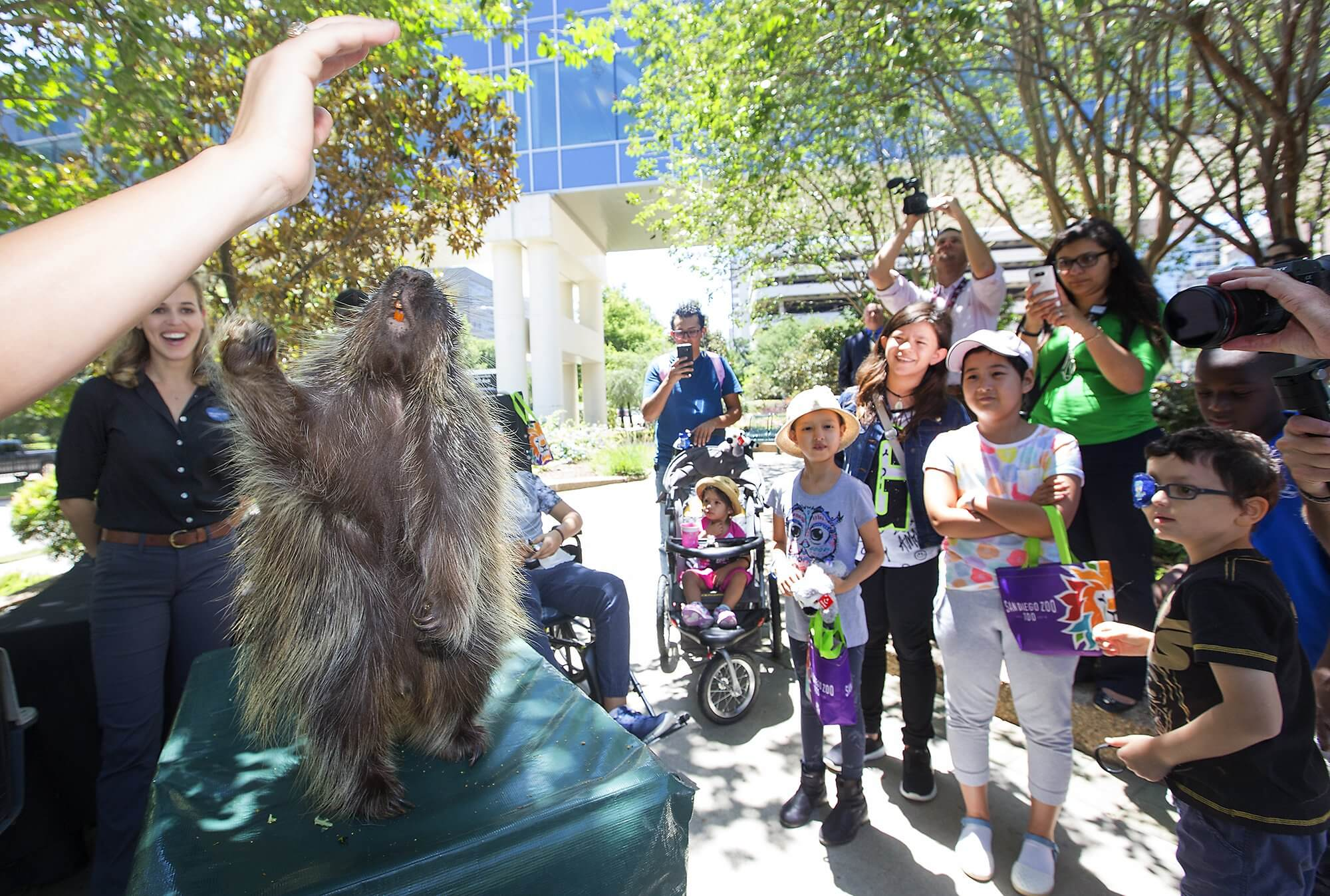 MD Anderson patients gather to learn about the North American porcupine who lives at the Houston Zoo.