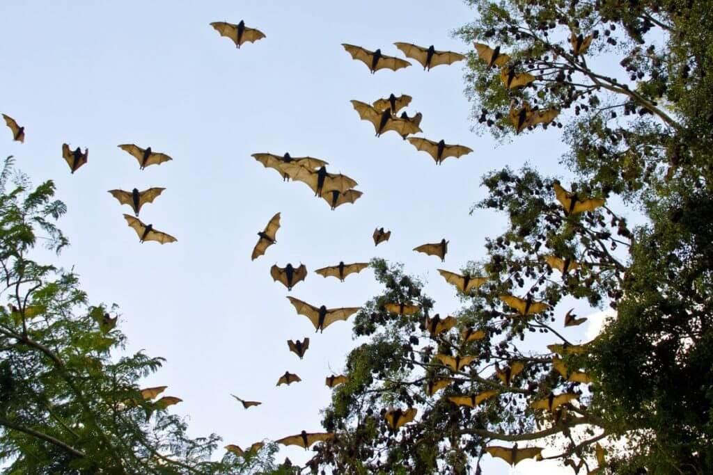 bats-3495777_1280