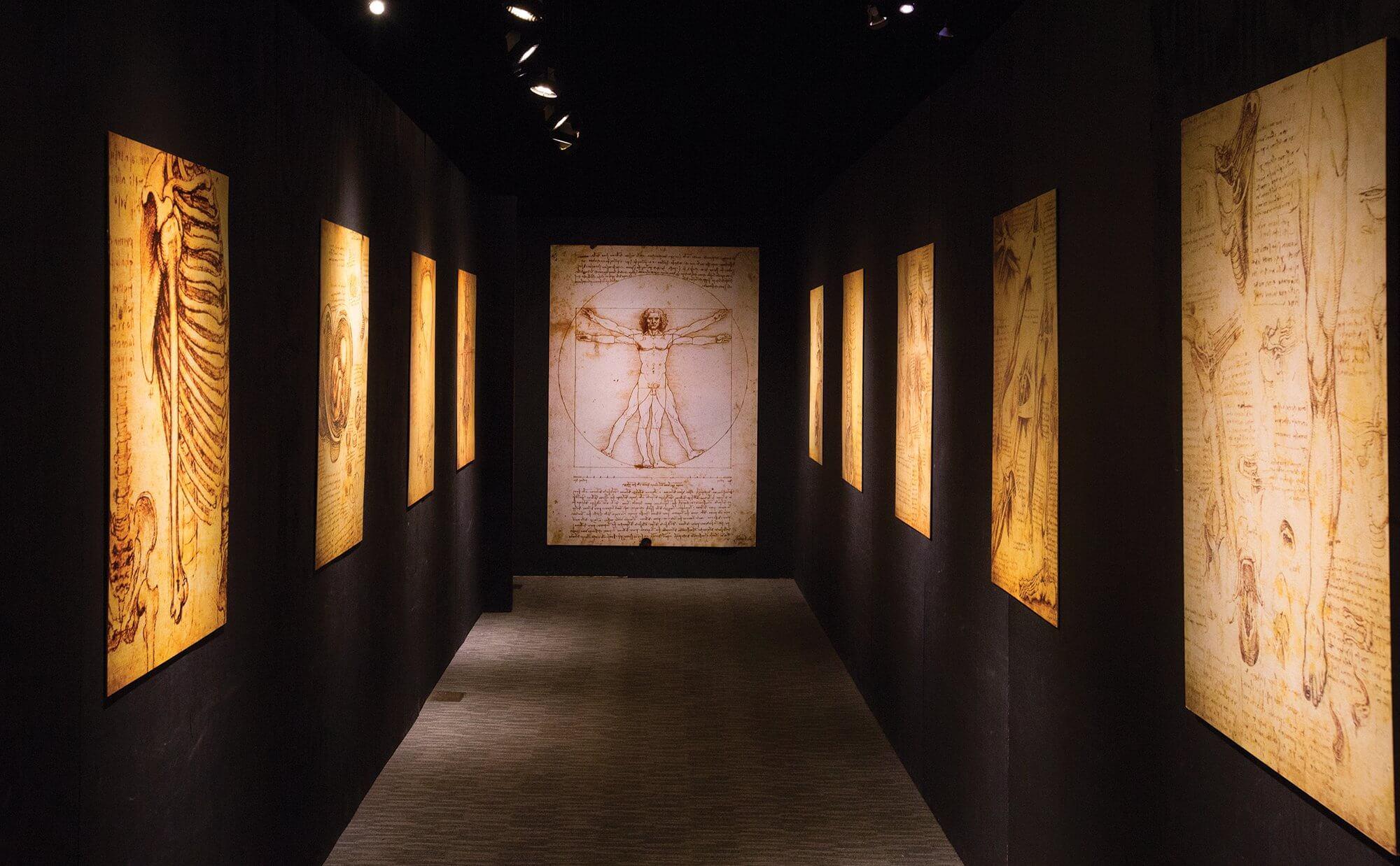 A reproduction of da Vinci's Vitruvian Man hangs in the exhibition.