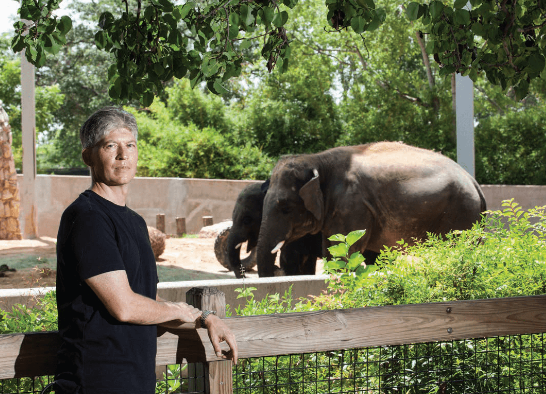 In honor of the research that Baylor College of Medicine's Paul Ling, Ph.d., has done with the Houston Zoo, the zoo named one of its baby elephants Baylor.
