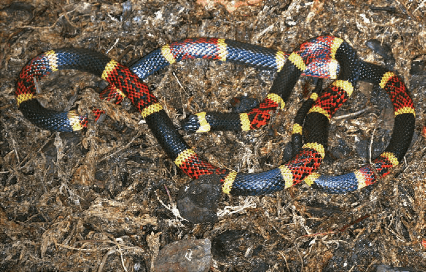 Snakebites are most prevalent during the warmer weather months, between april and October. (Credit: Houston Zoo)