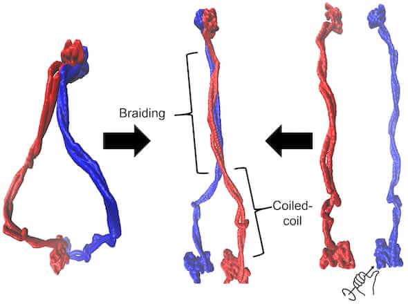 0113_BRAIDS-1-RN