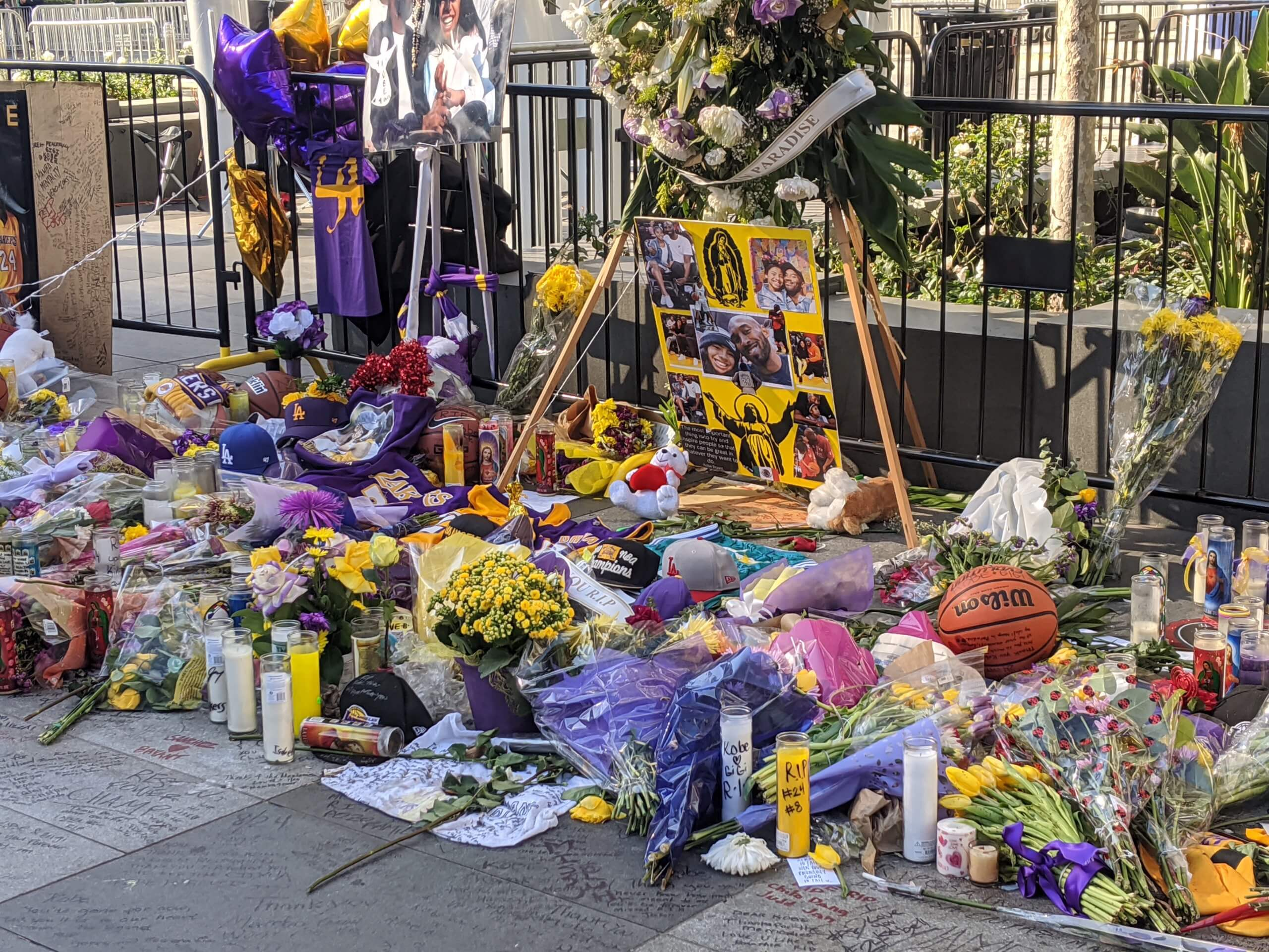 The Los Angeles Lakers' colors, purple and gold, abound in flowers, candles and mementos that were laid on sidewalks outside the Staples Center to honor the late basketball star Kobe Bryant. (Photo Courtesy of Erica Jousan)