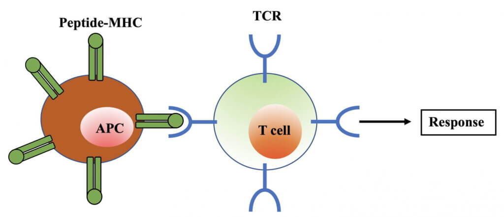0622_T-CELL-1-web