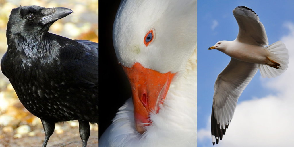 0713_BIRDS-1-WEB
