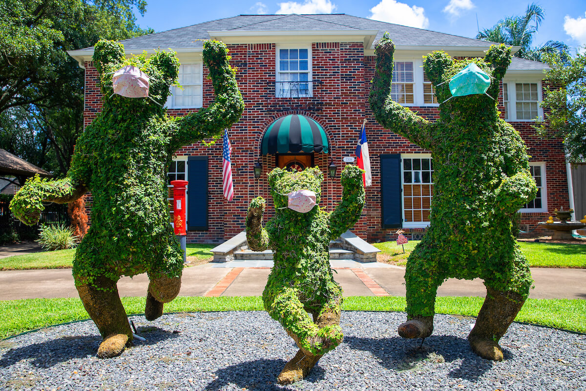 Bear topiaries near the corner of Greenbriar and Main in Houston don masks during COVID-19. (Photo by Cody Duty)